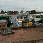 Unloading Lobster Boats - Cabot Fishermen's Co-op Association, PEI, Canada