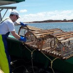 Landing Lobster Traps - Cabot Fishermen's Co-op Association, PEI, Canada